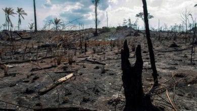Photo of Bolsonaro's moral myopia threatening Amazon rainforest